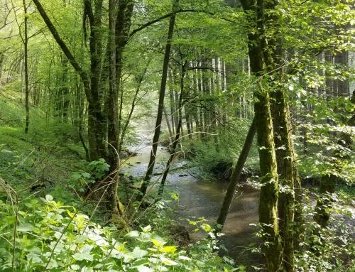 Tales from the Eifelsteig (Teun)