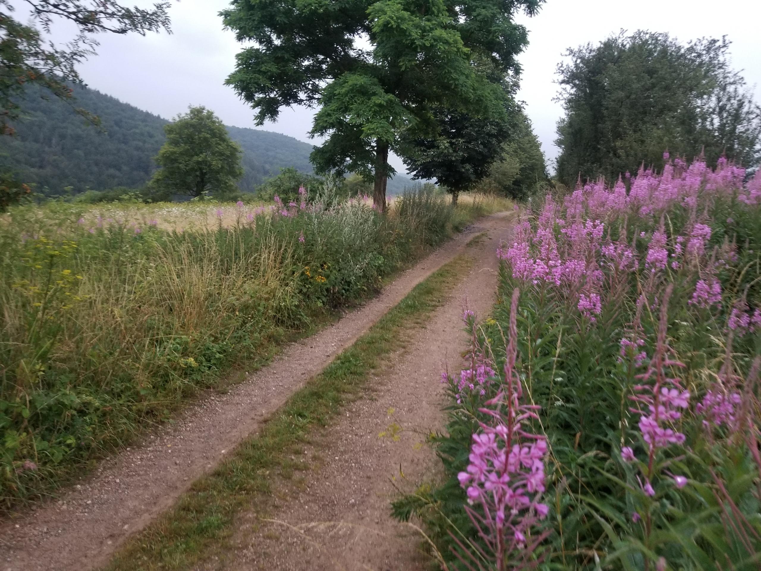 Track toward Kerpen