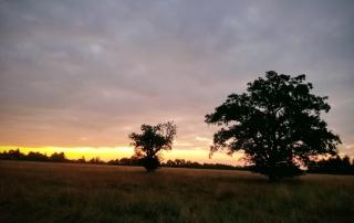 Fields around Landscheid