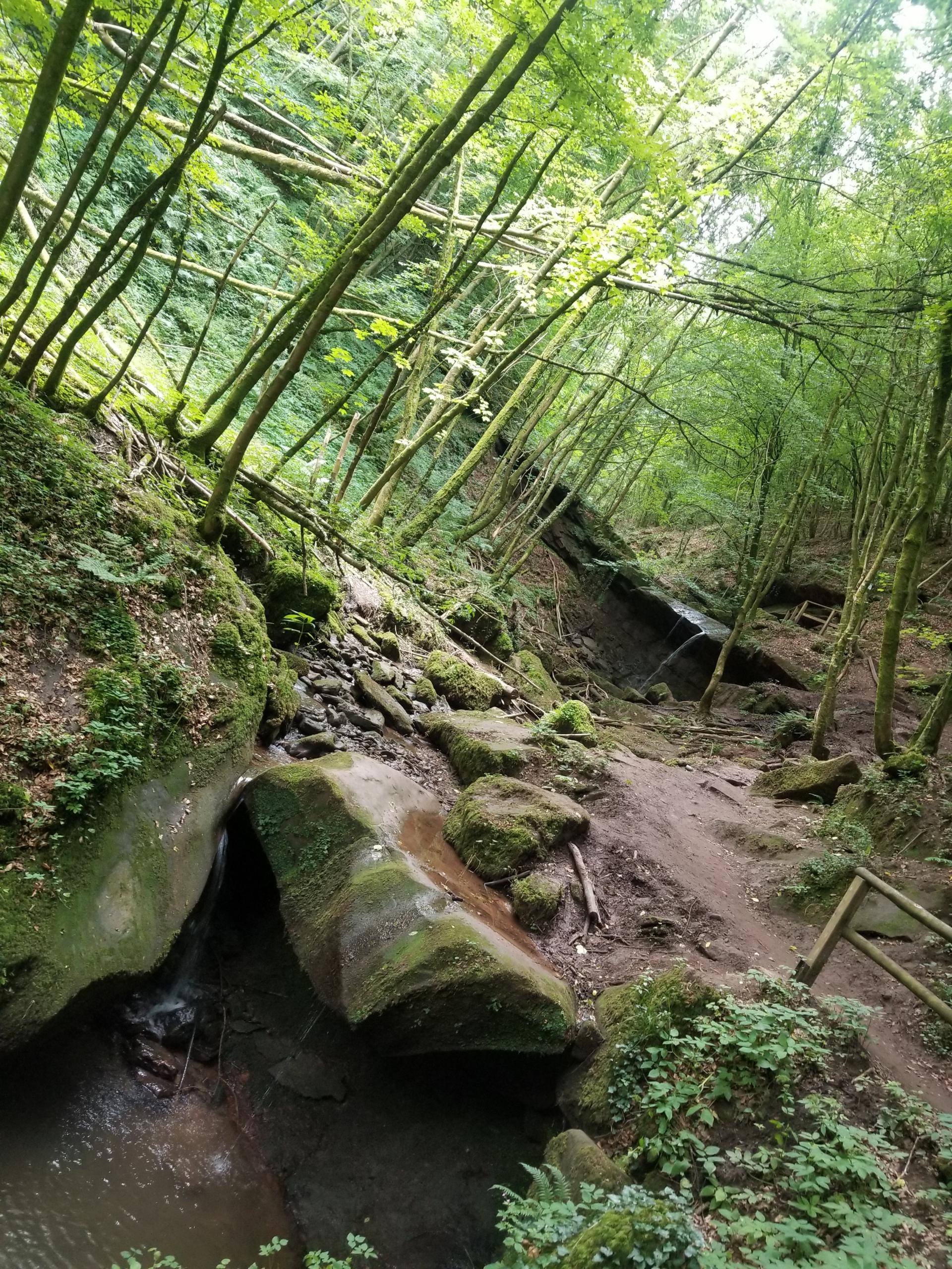 Butzerbach