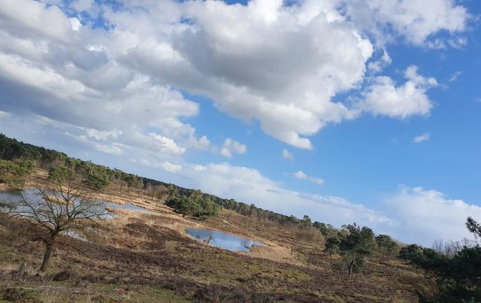 Nationaal Park De Maasduinen