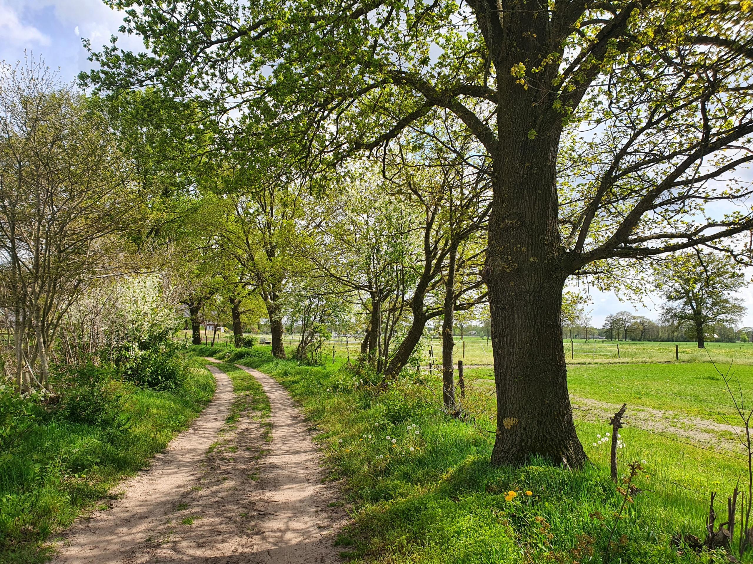 Fris lentegroen langs de Menumsweg nabij Holten