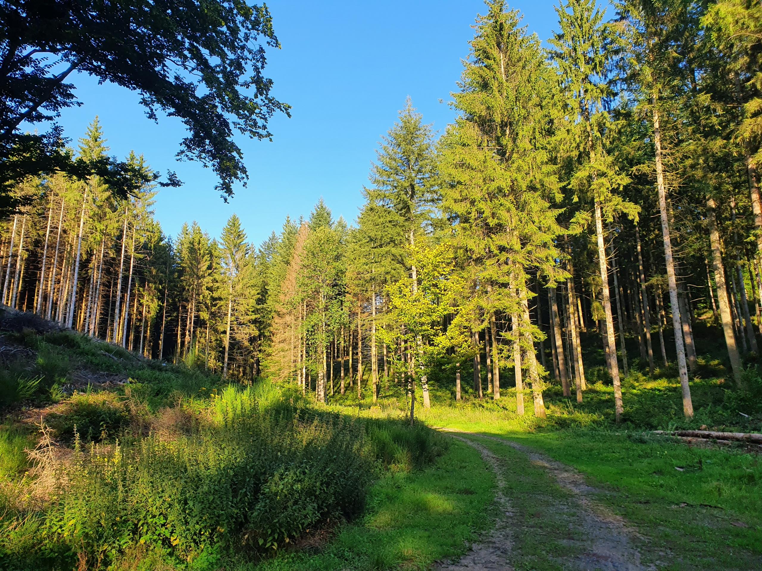 Prachtige bossen