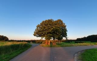 Een trosje bomen